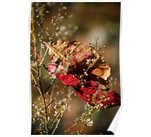 Catching Fall Poster