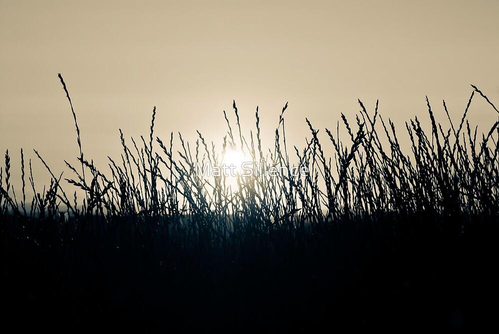 Wild Grass at sunset by Matt Sillence