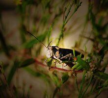 Grasshopper Spotlight by Rick McFadden