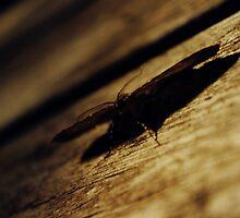 Mysterious Moth by Rick McFadden