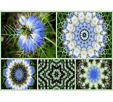 Kaleidoscope of flowers # 2 Photographic Print