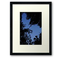Night Time Canopy Framed Print