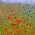 Wonderful red&blue . by Brown Sugar . OK ! friends so good !!! Views (390) favorited by (8) Thanks a bunch ! by © Andrzej Goszcz,M.D. Ph.D
