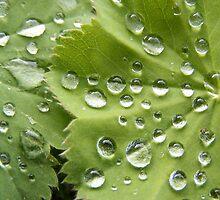 Rain Drops on a Scottish Summer Morning by Jonathan McColl