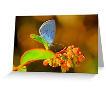 Holly Blue Butterfly, Baydale Beck, County Durham,England Greeting Card