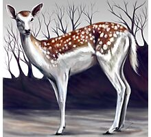 Deer in the forest Photographic Print