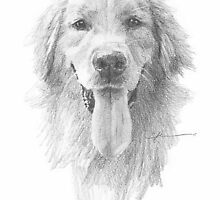 golden retriever drawing by Mike Theuer