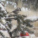 Christmas Chickadee by Christine Ford