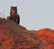 Eat, prey, owl by Christine Ford