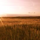 Barley Fields And The Setting Sun. by Lou Wilson