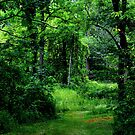 A Walk In the Woods by AndreaCT