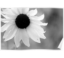 Sunflower Monotone Style Poster