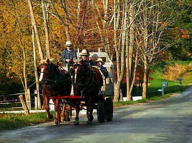 Drivers Ed... Amish Style (best when viewed large) by Marcia Rubin