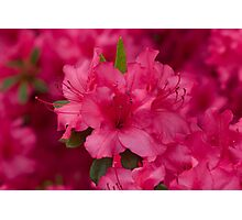Spring's Color Explosion! (As-Is) Photographic Print