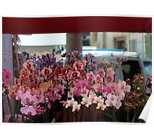 Orchids & Orchids Poster
