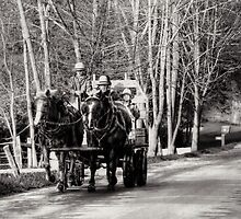 Drivers Ed - Amish Style by Marcia Rubin