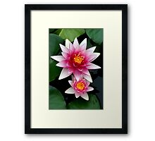 Stacked Blooms  Pink and White Water lilies Framed Print