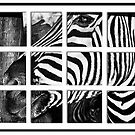 Zebra Puzzle by Erica Yanina Lujan