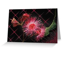 """Red Gum Blossom's"" Greeting Card"