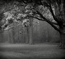 Fogged Forest by kelleygirl