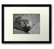 Groundhog day! Framed Print