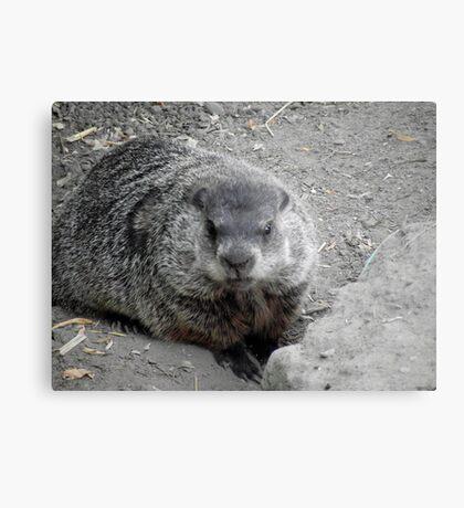 Groundhog day! Metal Print