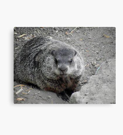 Groundhog day! Canvas Print