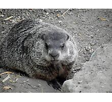 Groundhog day! Photographic Print