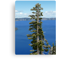 Crater Lake Oregon Tree Canvas Print