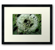 Bubblelions Framed Print