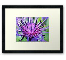 Spiky! Framed Print