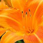 Now, that's Orange! by Amy Hochman