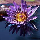 Purple Water Lily by Robert Armendariz