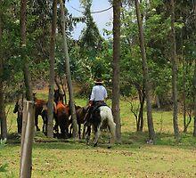 Horse Round Up by rhamm