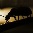 Bug by Floydwilson