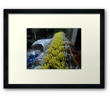 tell me what you are Framed Print