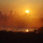 Early Morning Swim by Wheelssky
