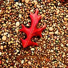Red Leaf on Rocks by Mariah Jones