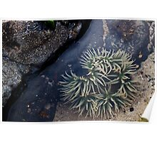 Small Tidal Pool Poster