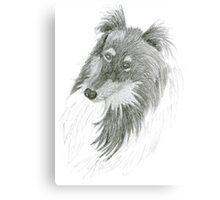 Black Lassie, Collie Sketch Canvas Print