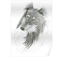 Black Lassie, Collie Sketch Poster