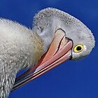 Muse - Pelican Series by Tainia Finlay