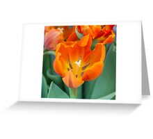tulip in the garden Greeting Card