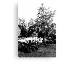 The Pear Tree. A Bush. Canvas Print