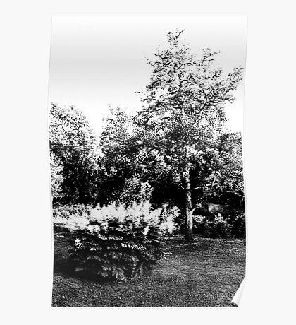The Pear Tree. A Bush. Poster