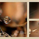 Perfect Drops by chloemay
