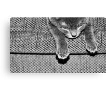 Kitten VII Canvas Print