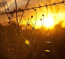 The Golden Glow, Quirindi NSW by lu138