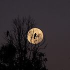 Magpie Moon by Josh Bush