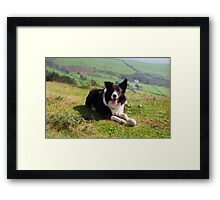 Indy: 19th March 1998 to 19th December 2011  Framed Print